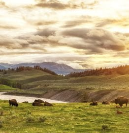 Yellowstone National Park and the Wild West Experience
