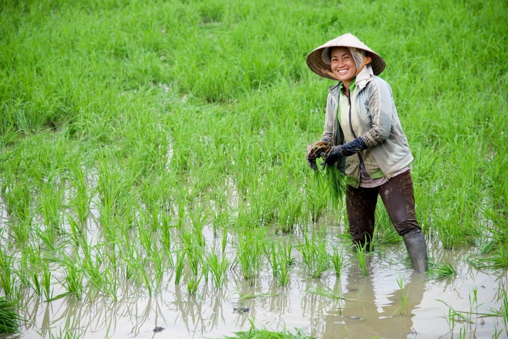 People - Smiley Lady in Rice Paddy - Near Can Tho, Vietnam - Copyright 2014 Ralph Velasco