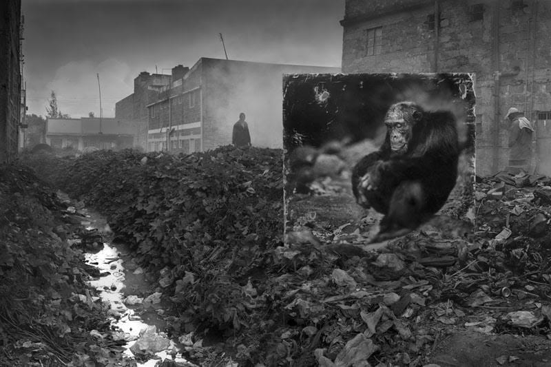 Photo by Nick Brandt, from the exhibition Inherit the Dust at Fotografiska 2016