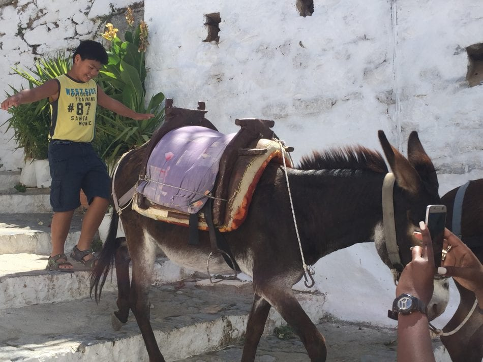 Donkey 'taxis' in Lindos, Greece