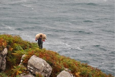 Con Moriarty rescuing a sheep from Ireland's cliffs