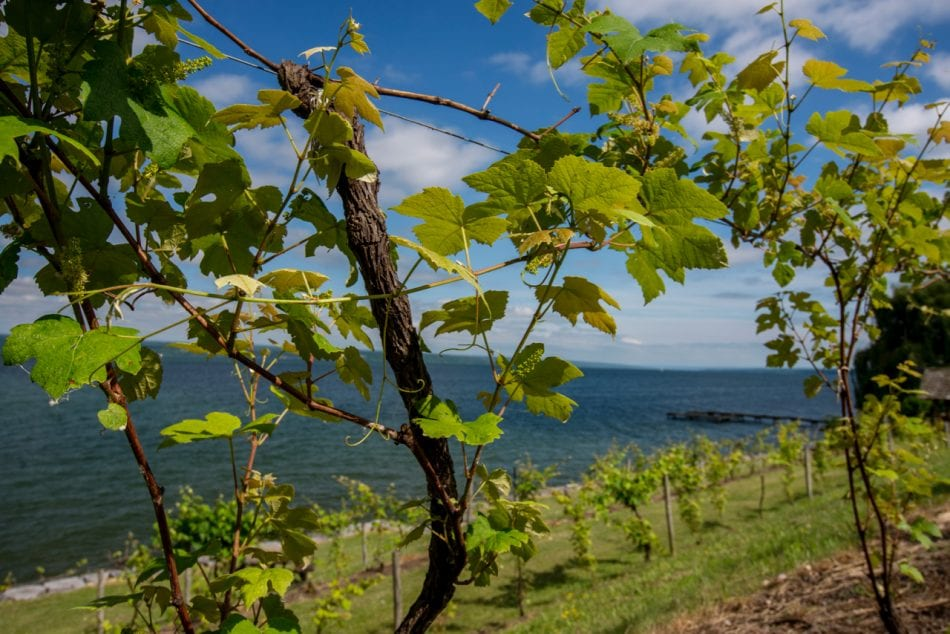 Finger Lakes Wine Country, NY