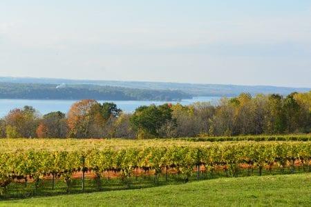 Seneca Lake Vineyards in Finger Lakes, NY