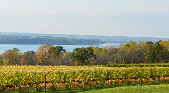 Seneca Lake Vineyards in Finger Lakes, NY
