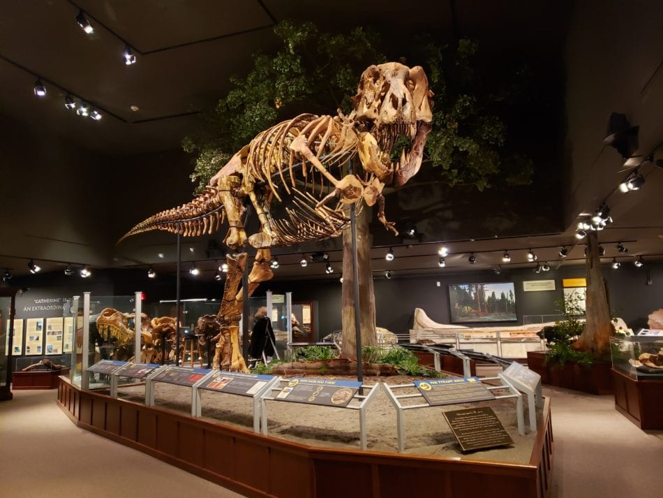 Museum of the Rockies in Montana