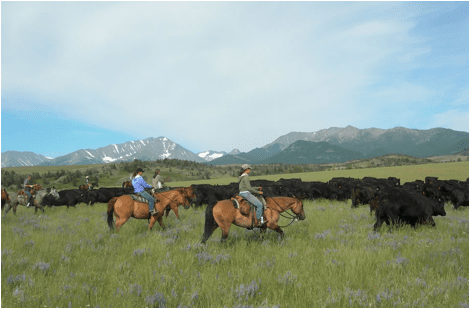 Montana's Yellowstone Country